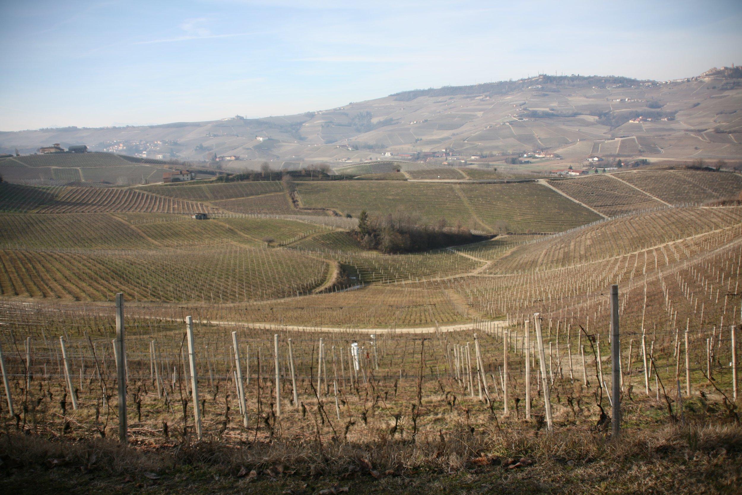 Cantina Cavollotto, Piedmont