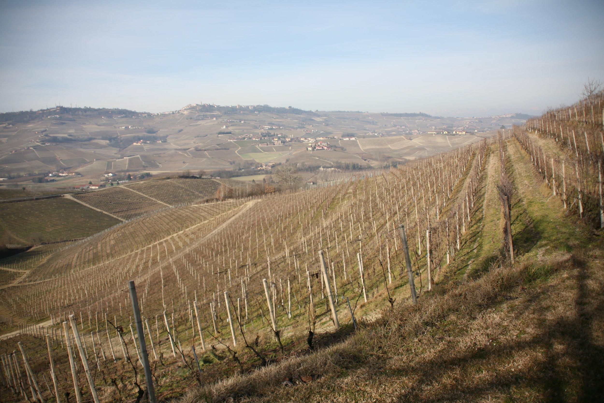 Cantina Cavallotto, Piedmont