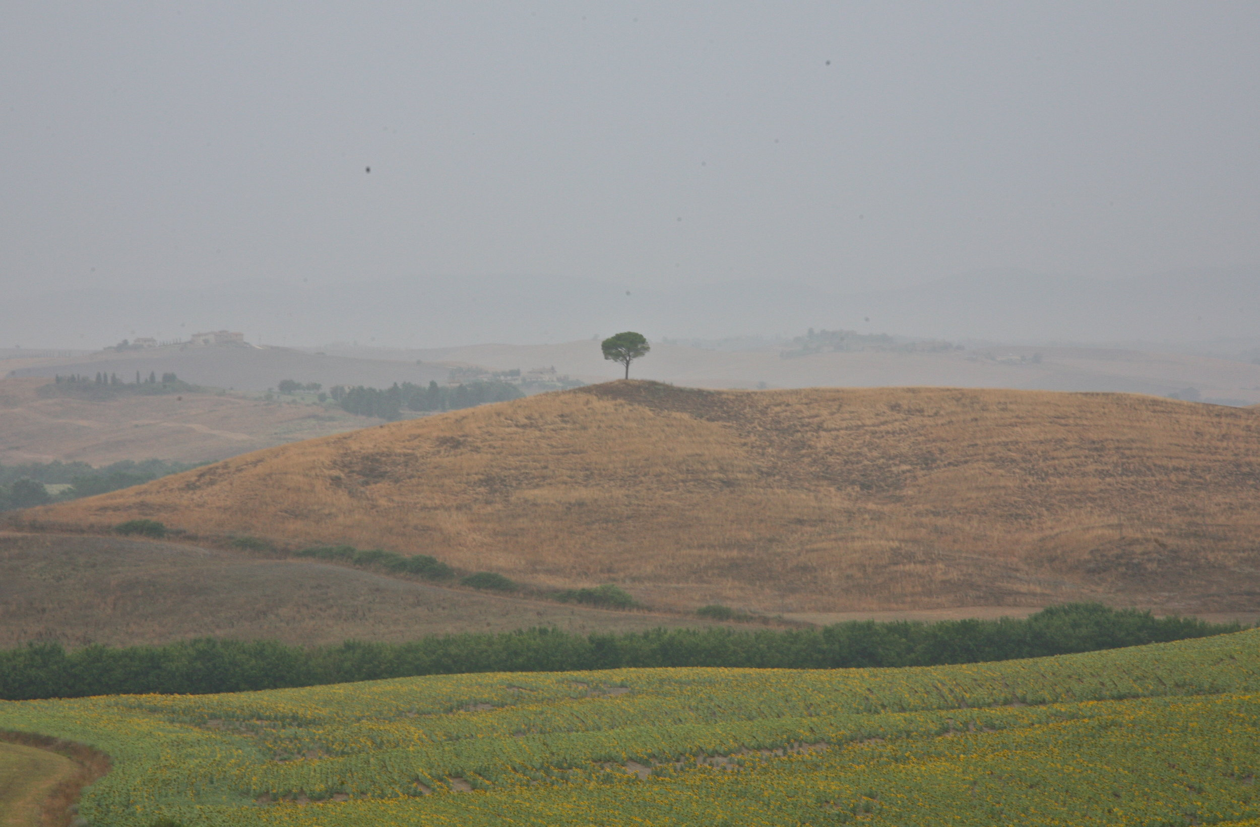 Countryside, Siena, Tuscany