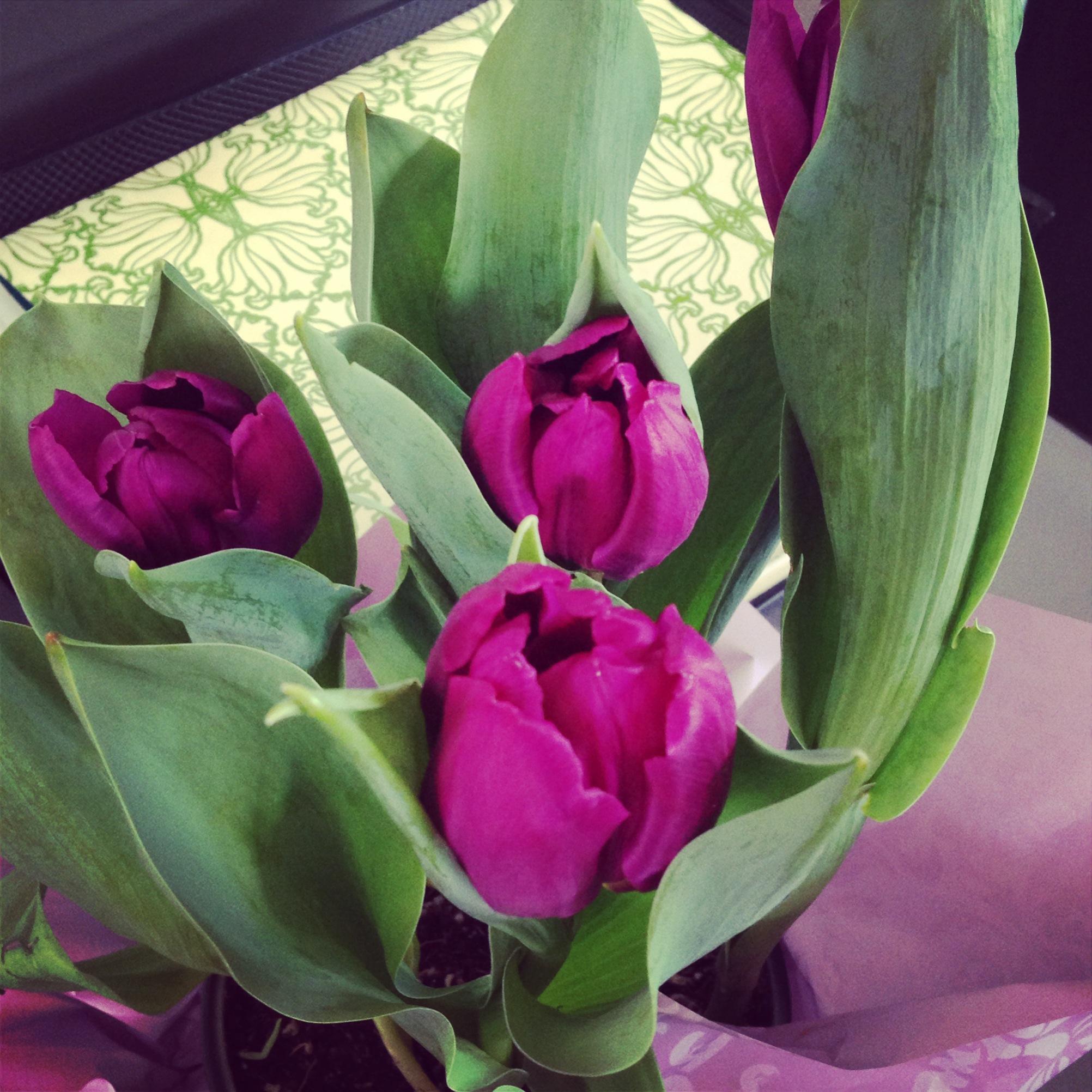 :: tulips from my best friends,  @norcalathlete  + @ diakadisf .