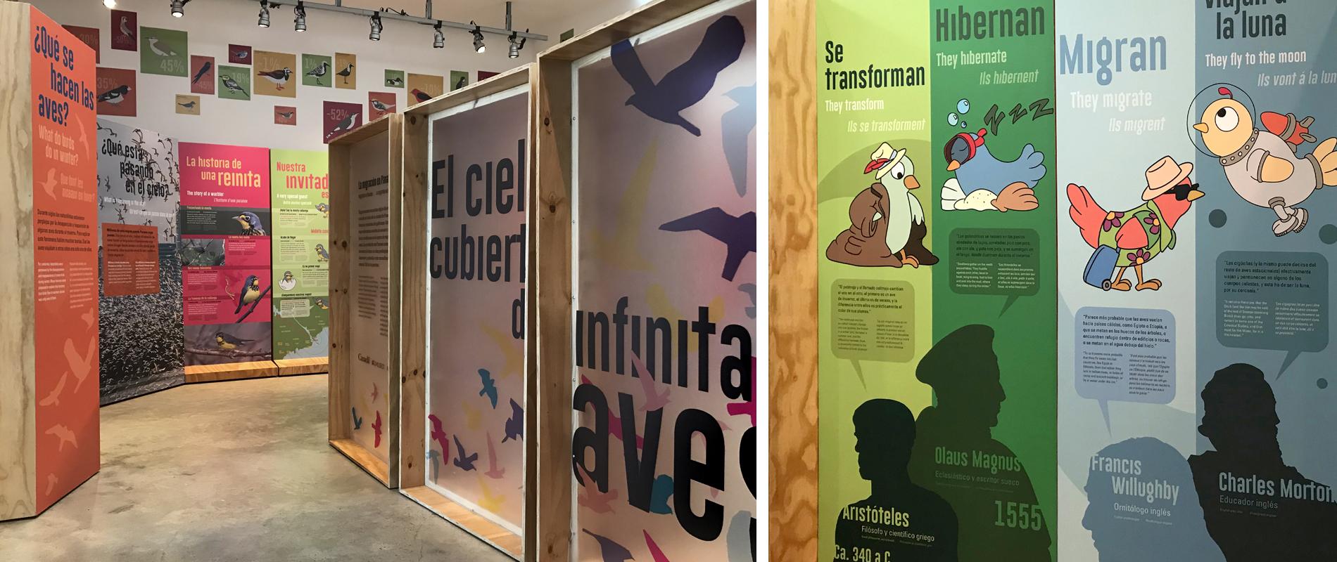 aves_migratorias_orosman_0.jpg