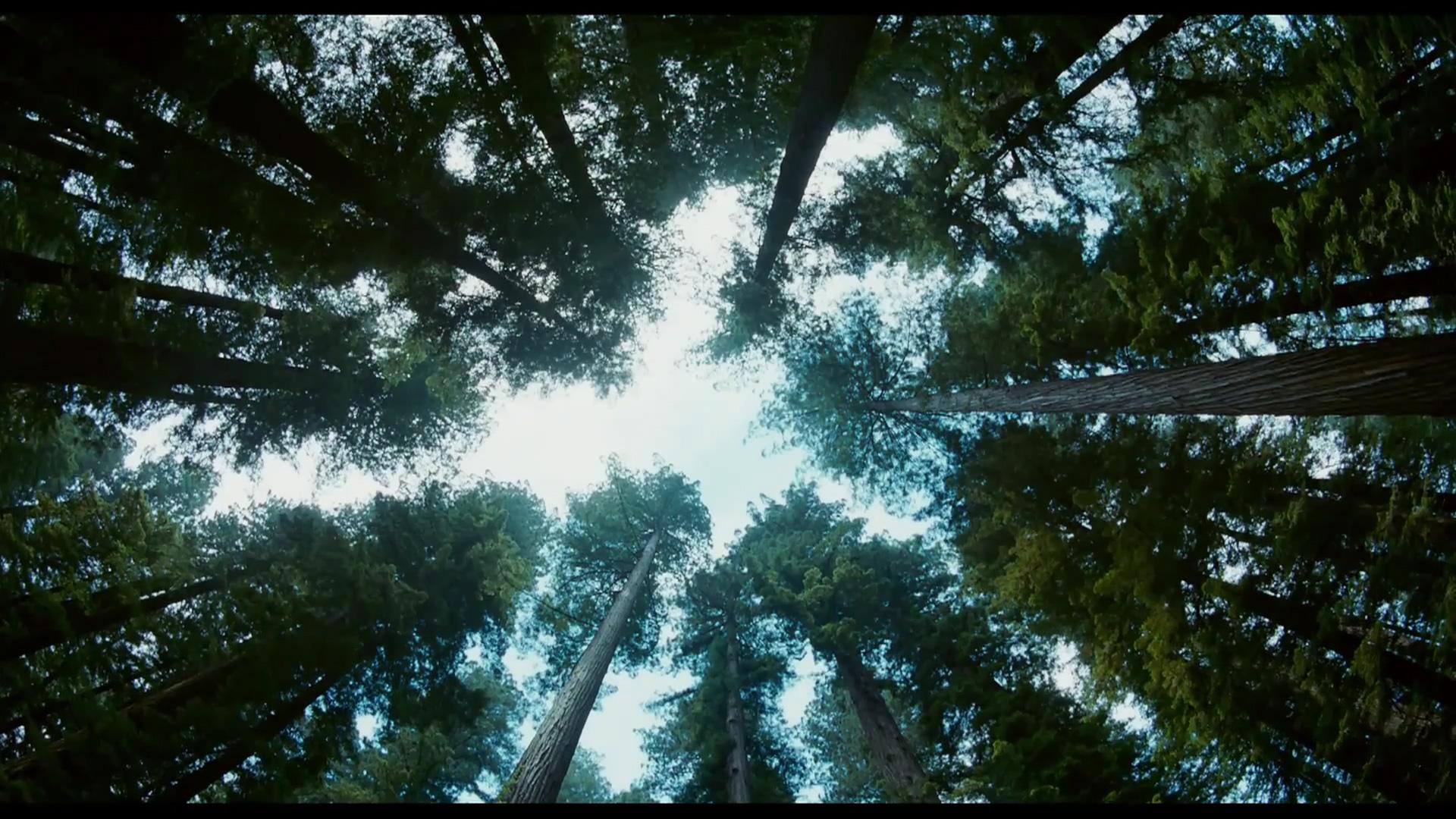 the-tree-of-life-tree-high-angle.jpg