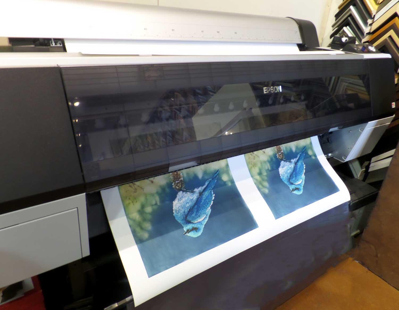 "Jessica Layton ""Bluebird"" art prints - Hot off the press at High Desert Frameworks."