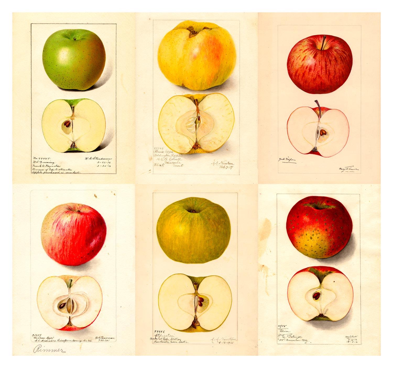 HDFW-Apple-300-15x14-6Apples-1500x1406-WEB.jpg