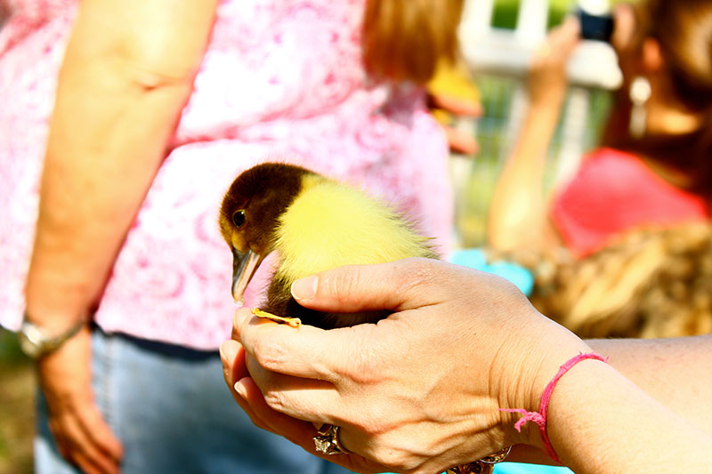Holding Baby Duck