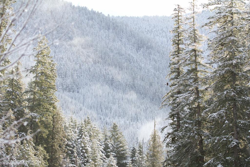 Gently frosted trees.Photo courtesy Paul Hodgson-www.phodgson.com.