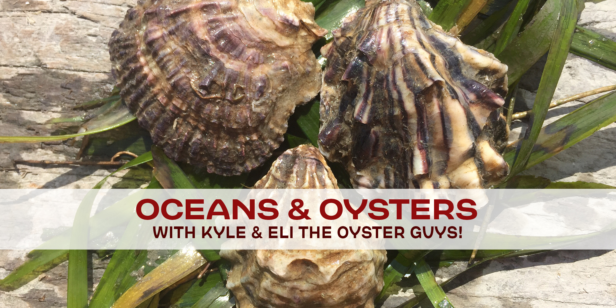 oceans-oysters