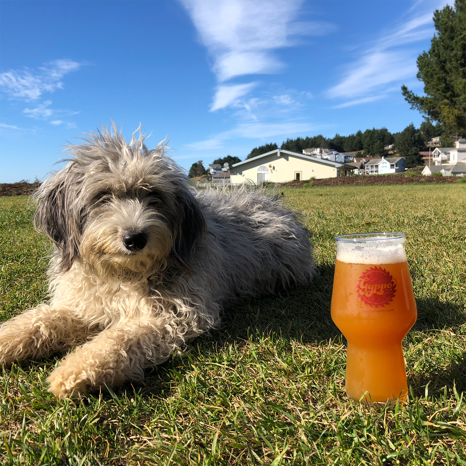 brewery-dogfriendly.png