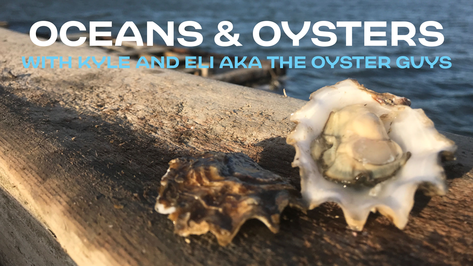 memorial-day-oysters