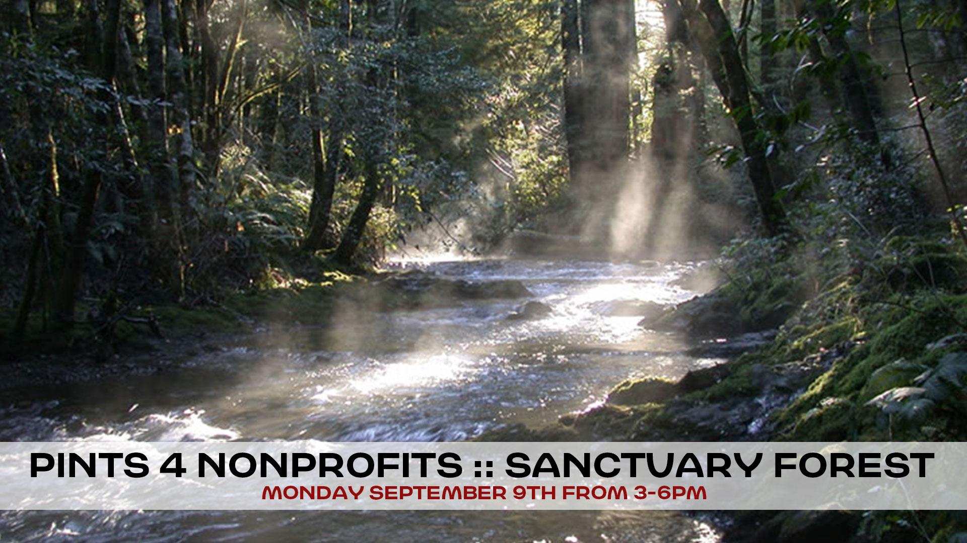 p4np-sanctuary-forest.jpg