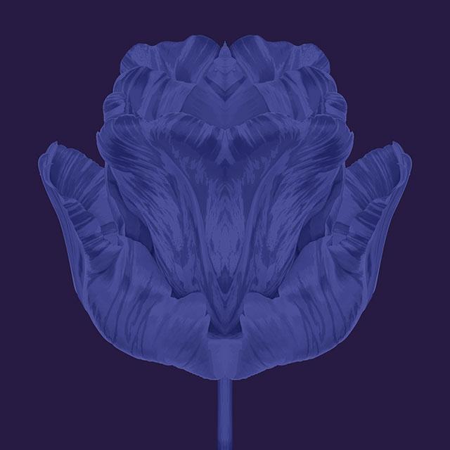 blueseries-tulipe-OK-80x80.jpg