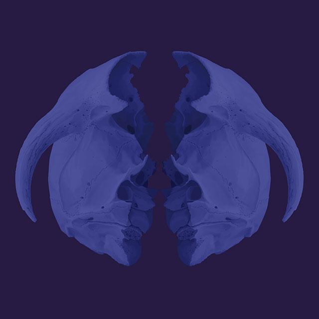 blueseries-Skull-OK2-45x45.jpg