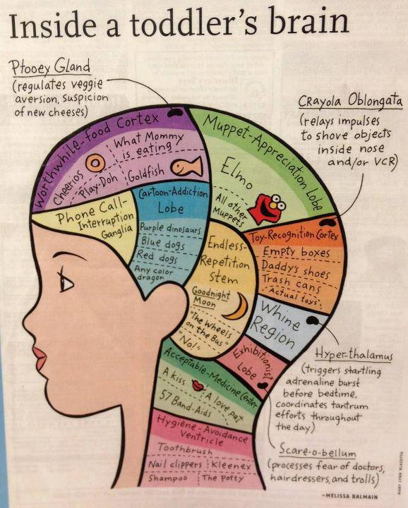 My favorite is the Ptooey Gland.