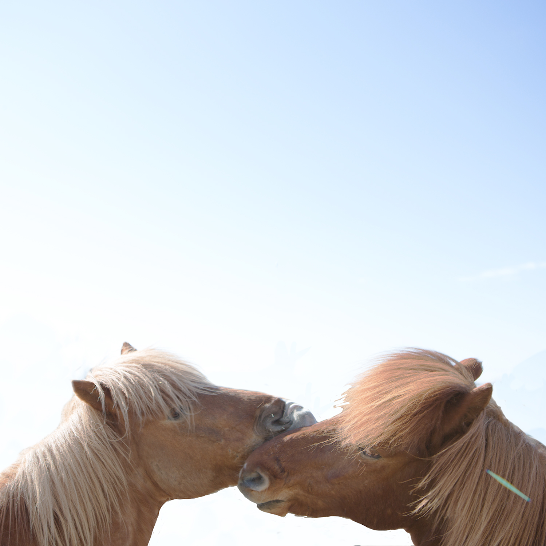 Horses5_X6A6252-Edit.jpg