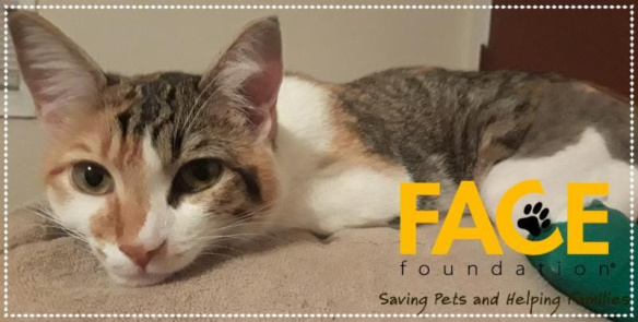 PHOTO: A cat named Chloe, saved by FACE Foundation.