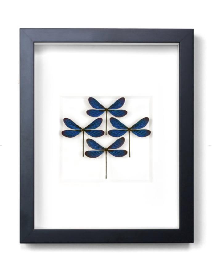 Azure Damselfly Diamond Black Frame   12.5×15.5h   PESGO24