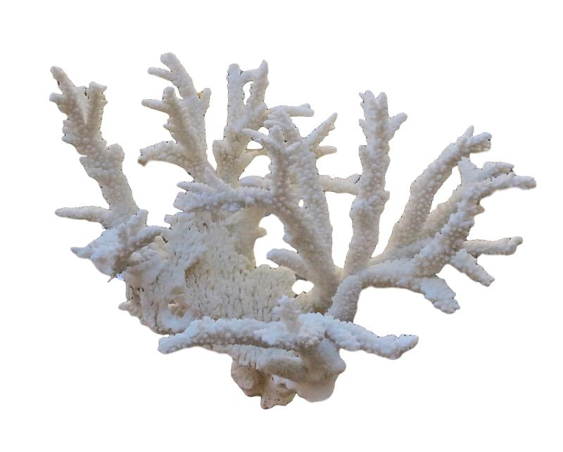 Branch Coral  29x20x20h  T915