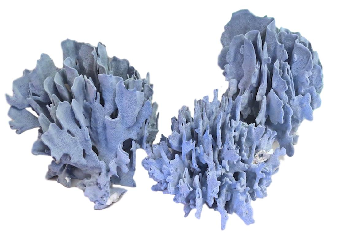 Blue Coral  sizes ranging from 8x5x7 to 14x12x11h +/-