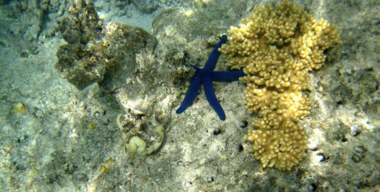 blue starfish.jpg