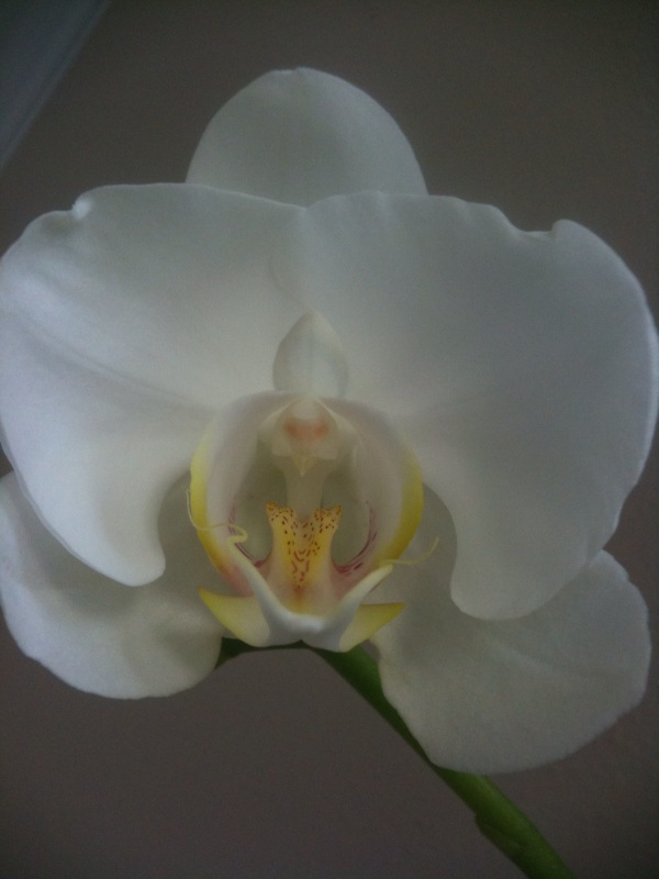 My Orchid is Bloooming!! :)