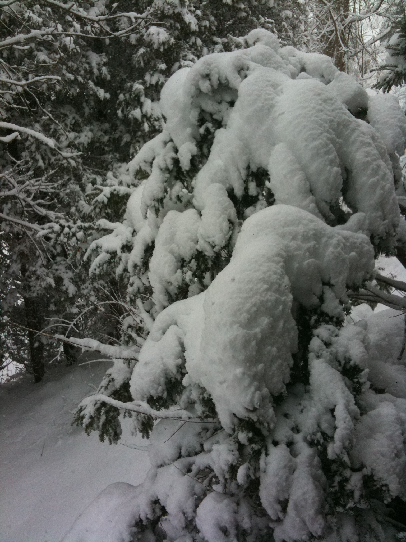 EPIC SNOW - Pictures from our home and snowy yard!! #ROC #Snowmaggedon