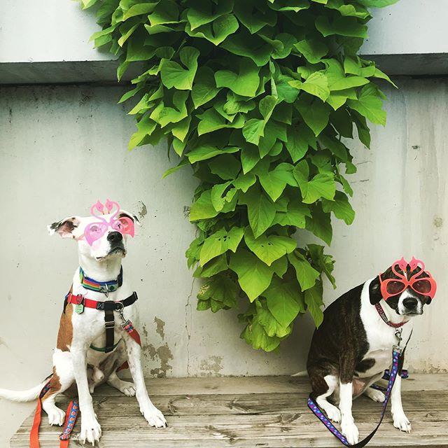 Leon and Mabel want you to join us on our upcoming #caninecruise September 10 to benefit @savethestraysmilw ! . . . . . #adoptdontshop #adoptrescuefoster #savethestrays #dog #boatdog #dogsofinstagram #donations #milwaukee #mke #milwaukeeriver #downtownmilwaukee #midwest #midwestisbest #greatlakes #freshcoast