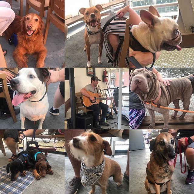 We had so many great dogs and songs on our #CanineCruise benefiting @savethestraysmilw earlier this week! Huge thanks to @dr_noahs_ark for entertainment as well as a few of our raffle donators @lakefrontbrewery #lovinovenpetbakery #bentleyspetstuff