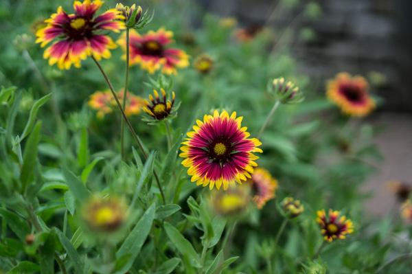 wildflower-3.jpg