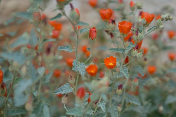 wildflower-5.jpg