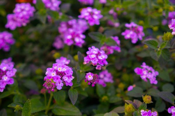 wildflower-1.jpg