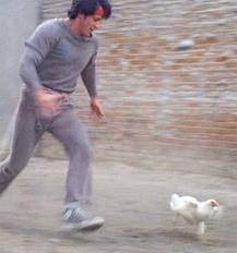 Rocky Chasing Chicken