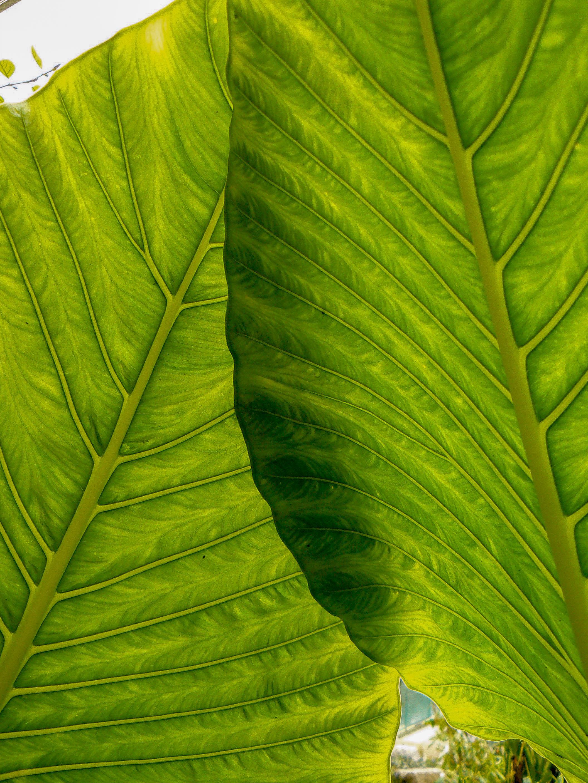 Palm Leaves_005.jpg