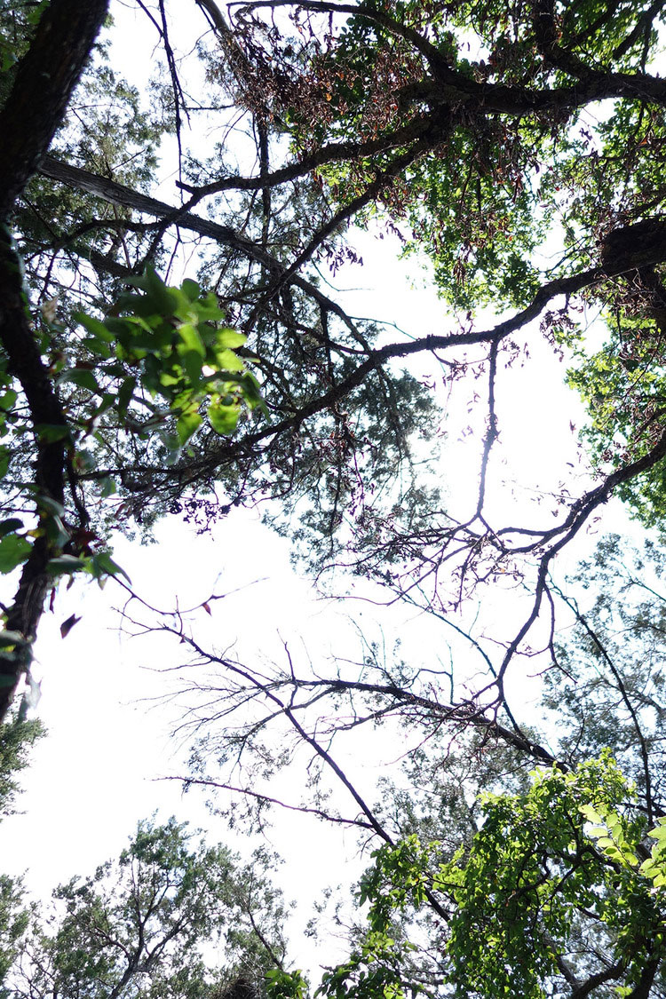 trees(sm.jpg