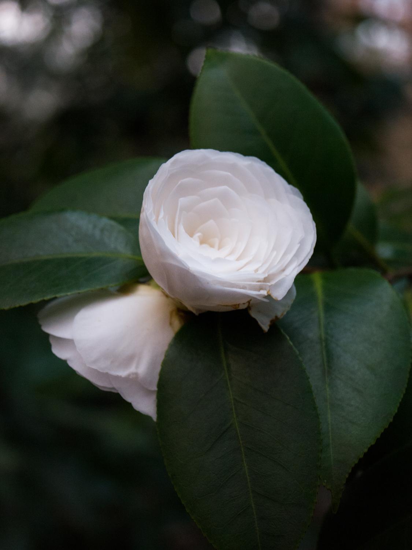 Hatcher Garden Web-1140018.jpg