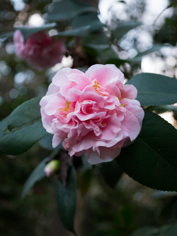 Hatcher Garden Web-1130944.jpg