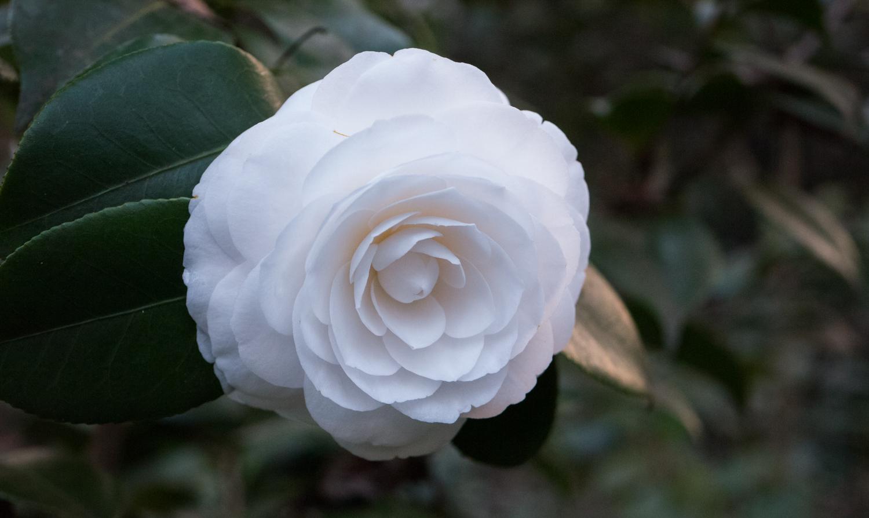 Hatcher Garden Web-1130957.jpg