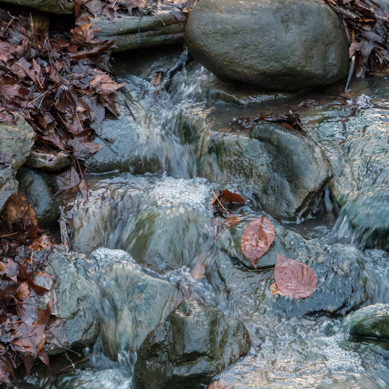 Hatcher Garden Web-1130934.jpg