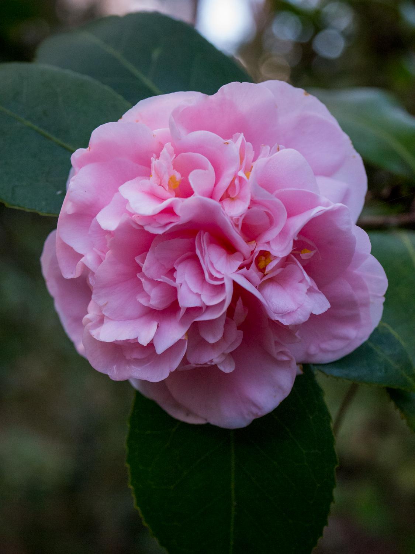 Hatcher Garden Web-1130922.jpg