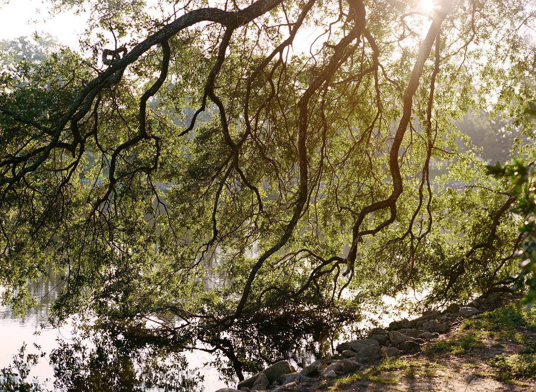 Sun Flare of Live Oak Tree touching Water_Reflection_web.jpg