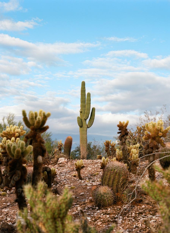 Postcard of Cactus in Phoenix Botanical Garden_web.jpg