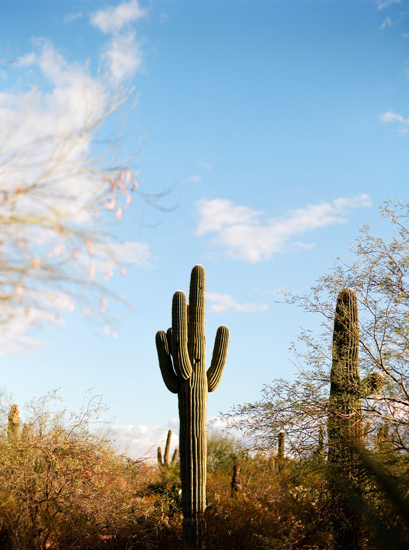 Cactus in Desert Botancial Garden 03_web.jpg
