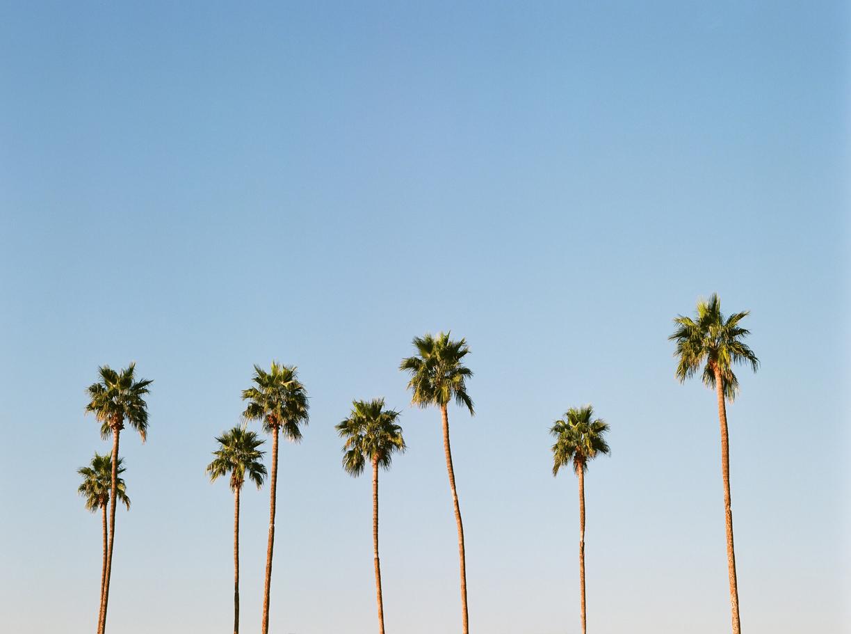Row of Palm Trees in Phoenix_web.jpg