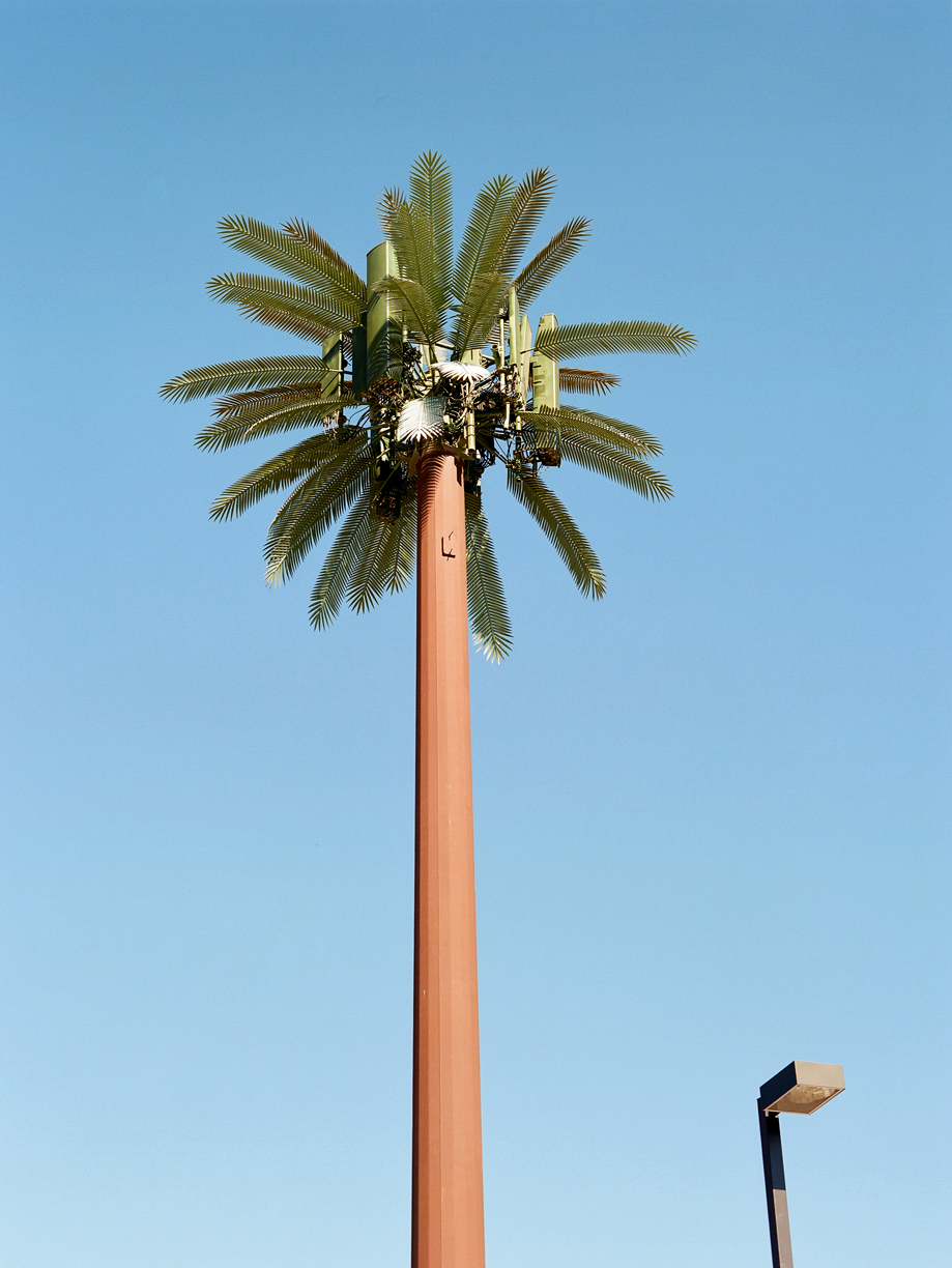 Electrical Artificial Palm Tree_web.jpg