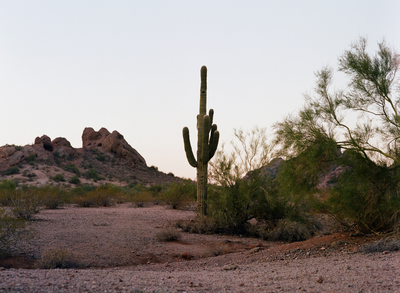 Papago Park at Dusk_Cactus_web.jpg