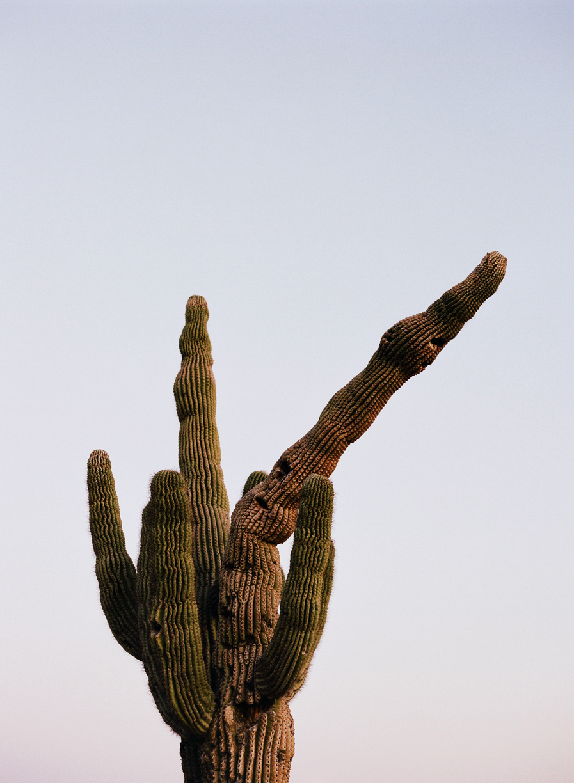 Twisty Cactus 02_web.jpg