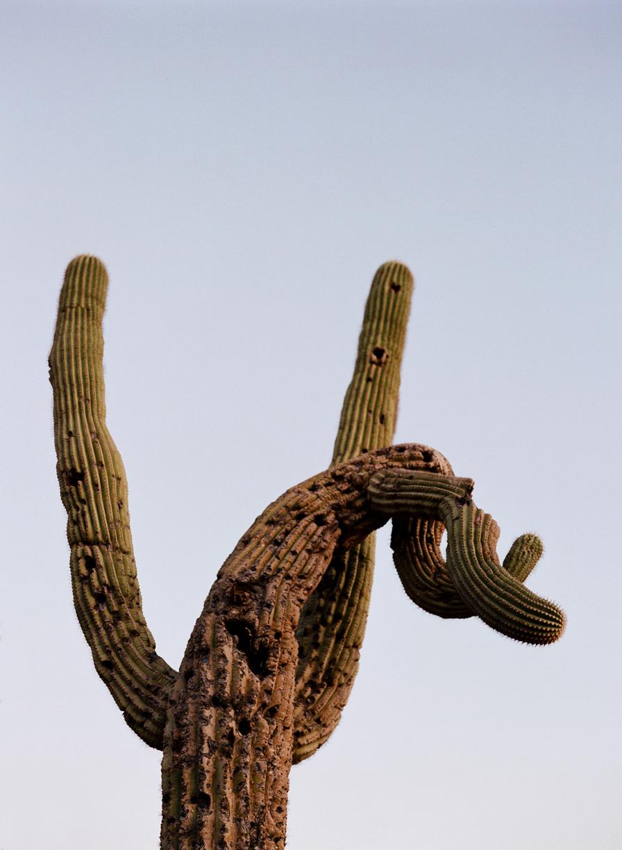 Twisty Cactus_web.jpg