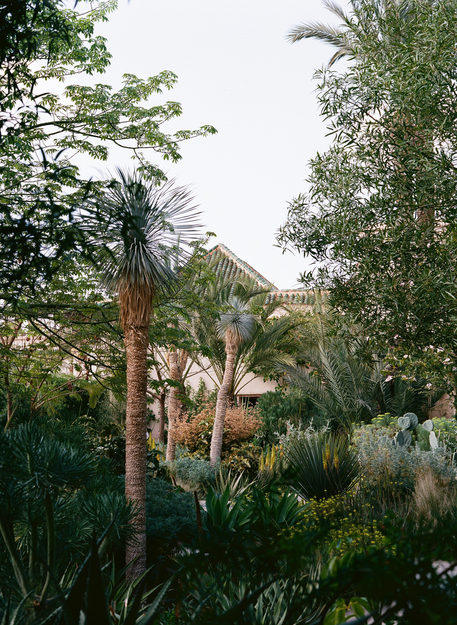 Palm Trees and Bushes with Building Top at Le Jardin Secret_web.jpg