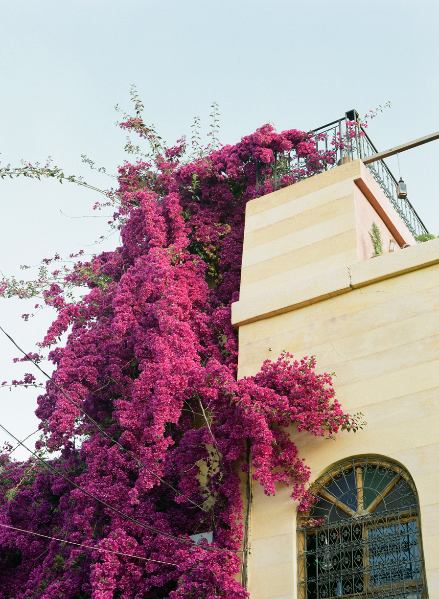 Bougainvillea Encroaching on Yellow Building in Medina_Marrakech_web.jpg