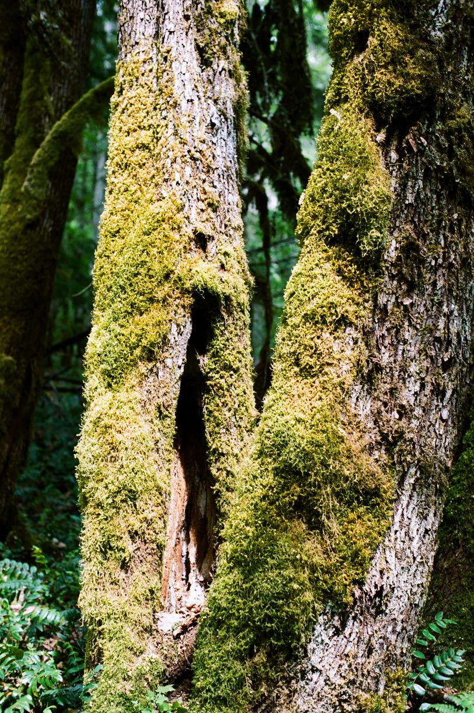2 Mossy Tree Trunks_Trail_N Cascades_web.jpg