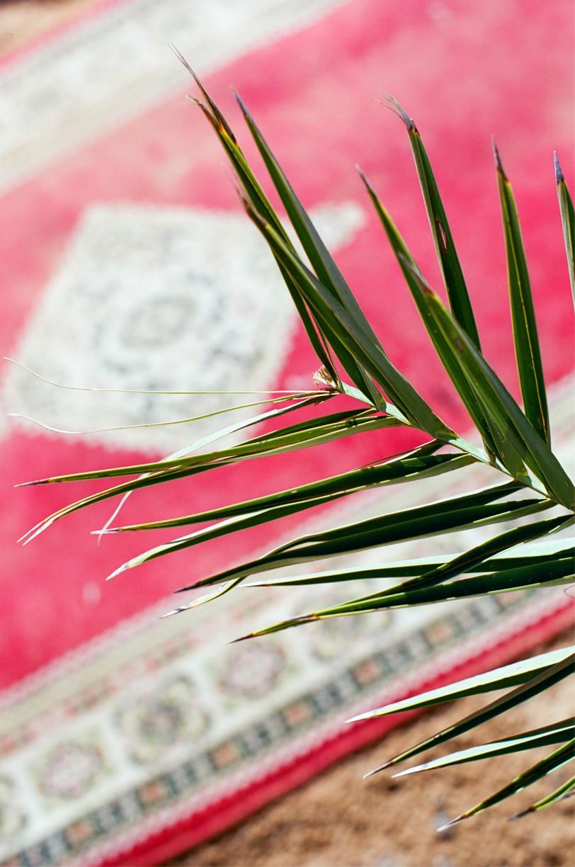Plant and Red Rug_Sahara Desert Luxury Camp_web.jpg